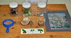 Kara's Classroom: All About Trees Preschool Science Center