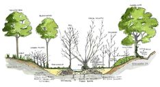 Retrosuburbia: Spring Creek Novel Ecosystem