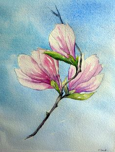 Fleur de magnolia (étude)