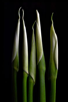 Calla Lily Stems ~ Moody Flower Photography Print Floral Wall Art, Floral Prints, Art Prints Online, Online Art, Green Wall Decor, Still Life Flowers, Professional Photo Lab, Winter Flowers, Affordable Wall Art