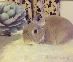 Bunny patiently awaits head scratches - August 9, 2016