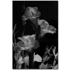 'Gladiolus XI' by Martha Guerra Photographic Print on Canvas