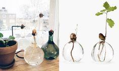 3 knep på hur du får ditt ekollon att växa till en liten ek - Metro Mode