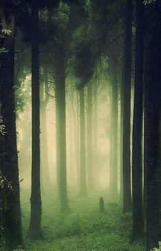 "ancientdelirium: "" woods,dark & deep by mefistophillis on Flickr. """