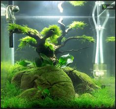 ... aquascaping # naturaquarium more aquascaping aquarium nano aquarium
