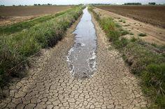Ausgetrockneter Bewässerungsgraben zwischen Reisfeldern in Richvale,...