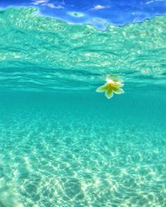 Beach Wallpaper, Summer Wallpaper, Beautiful Ocean, Beautiful Beaches, Beach Pictures, Cool Pictures, Some Beautiful Pictures, Sea And Ocean, Underwater Photography