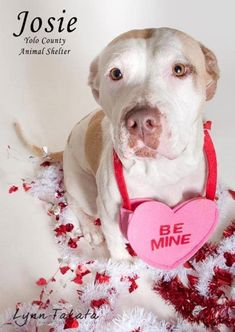 planning adopt a pet