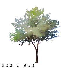 32 Ideas Plants Watercolor Architecture For 2019 Watercolor Architecture, Landscape Architecture, Landscape Design, Watercolor Plants, Watercolor Landscape, Tree Watercolour, Tree Render, Tree Plan, Tree People
