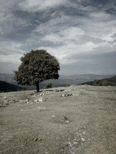 Old tree ..