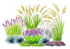 Paahteisen paikan nurmikon voi korvata kuivuutta kestävillä perennoilla ja heinillä. Viherpihan suunnitelmalla istutat perennat aurinkoon!