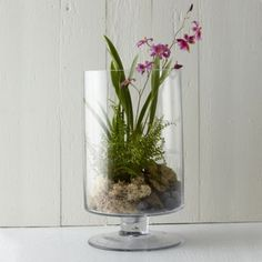 """A polished cylinder of hand-blown glass gains extra height from the simple, footed base that supports this tall terrarium.- Hand-blown glass- Indoor or outdoor use- Imported14""""H, 8"""" diameter"""