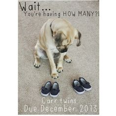 twin pregnancy announcement with dog - Emmie Girl - Schwanger Future Maman, Future Baby, Twin Baby Announcements, Pregnant With Twins Announcement, Pregnancy Announcement Dog, Twin Humor, Expecting Twins, Baby Kind, Baby Baby