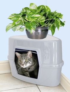 Good Ideas Light Grey Corner Cat Litter Tray (876G) Discreet, compact and no more odours.: Amazon.co.uk: Kitchen & Home