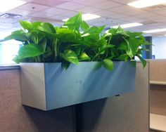 Office chic cubicle decor carry on style business chic pinterest cubicles chic and chic - Cubicle planters ...