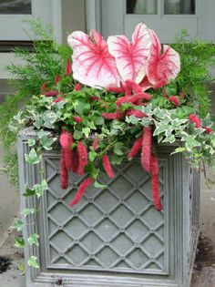 Good ideas for shade containers in the garden