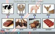Estudia inglés en Irlanda & Collins- Animal and food