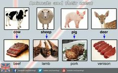 Estudia inglés en Irlanda & Collins- Animal and food