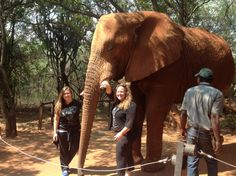 Elephant Sanctuary: Experience a up close and personal feeling with an African Elephant where you will be able to interact! Elephant Sanctuary, African Elephant, Safari, Feelings, Animals, Animales, Animaux, African Bush Elephant, Animal