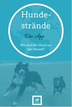 Hundezeitung | Hundestrände – App Review | https://hundezeitung.info