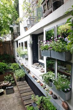 "From the article, ""10 Things to Steal from Paris Gardens"" (Gardenista) Cecile Daladier Paris garden ; Gardenista- *** Mirrors + Window Boxes on a blank wall ***"