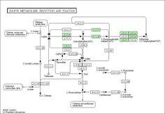 Java Data Mining:
