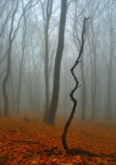 Foggy dead tree forest scary