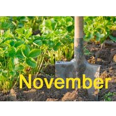 Gardening jobs this month: November    What to do in the garden in November, from the gardening experts of House Beautiful, Prima and Country Living