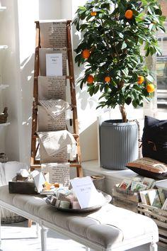 indoor orange tree. Place it near a window for sunlight