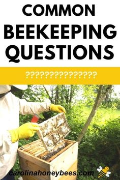 What is the big deal with beekeeping?  Explore the world of the honey bee with these common beekeeping questions most often asked by new beekeepers.  #carolinahoneybees #beekeepingquestions #beekeeping