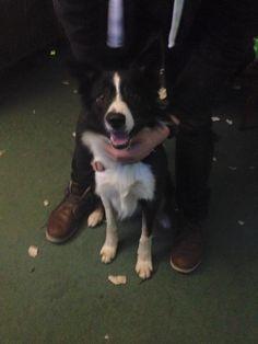 Found Dog - Border Collie - Hamilton, ON, Canada L8L 2B8 on January 02, 2016 (21:45 PM)