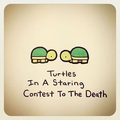Turtle in a staring contest to the death Cute Turtle Drawings, Cute Animal Drawings, Kawaii Drawings, Cute Drawings, Turtle Sketch, Tiny Turtle, Turtle Love, Cute Turtles, Baby Turtles