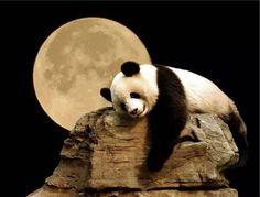 Panda.... Moonium!!❤️❤️❤️