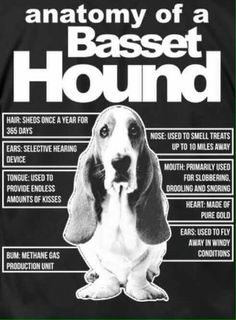Anatomia de Basset Hound