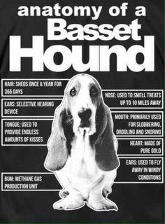 Basset More