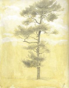 """""""White Pine"""", 9x12 silverpoint on toned paper > Drawing > Portfolio > Thomas Kegler"""