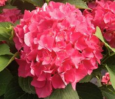 Brighten up your garden by adding some of the best and brightest flowers around!