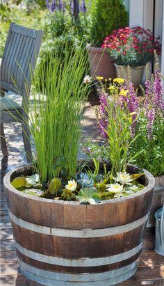 Balkon Ideen Selber Machen: Ein Mini Teich Im Topf