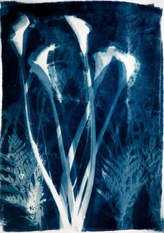 Marcia Trieger. An ancient photographic process called cyanotype made these images. The process consists of making a photographic emulsion from two simple chemicals, which results in a blue and white image, also known as photograms. Once the watercolor paper is coated with the emulsion, it is sensitive to daylight. Objects can be laid on top of the paper, and what does not allow light to hit the paper, creates a white image, and the rest turns blue. Each cyanotype is a one of a kind.