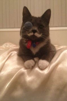 So my friend rescued this moustache from an animal shelter; : aww