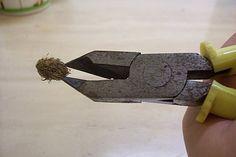 如何讓小葉欖仁不再是個懶人 - 它的成長非常緩慢,要有 120 分的耐心 ⚫ 用斜口鉗剪去小葉欖仁外皮,留下堅硬的核果。 ▶ 秘訣:1. 去皮後把核果丟在水裡,若浮在上面都是空包彈或種子有問題的,可以放棄,選擇沉在水面下的核果剪;2. 最好放在塑膠袋裡剪,以免剪開後不知飛到何處去。)▶小葉欖仁核仁芽點是較尖的那一端,要向下種。 ⬛ 種子的處理,不只是泡水而已。最好還是以乾濕交替法,也就是泡水一天、烈日曝曬一天,如此乾濕交替數個循環,種殼產生裂縫,讓水份與空氣進入種仁,以利種芽。不管是大葉欖仁還是小葉欖仁,發芽後都應該放置在陽光充足的室外環境。日光燈雖能供給光線,但是光波長與光色系卻與天然日光截然不同。如果以日光燈取代天然日光,植物絕對會營養不良。以小葉欖仁來說,絕對不行。 Green