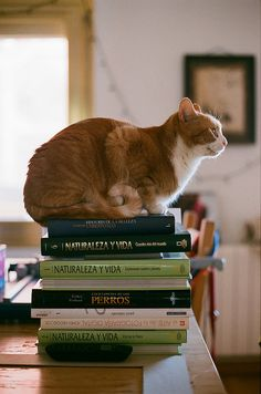 """""""Untitled,"""" by Valentina C, via Flickr -- Looks like he's thinking, """"Nope, no studying gonna happen on my watch!"""" -- (Also saw this captioned elsewhere as """"Reading. Method: Osmosis"""")"""