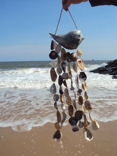All sea shell windchime with a blue whelk for the base. The strands of shells are attached along the mouth of the shell. The sea shells used