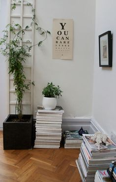 Growing Jasmine indoors!! Notes-On-Lifestyle-Climbing-jasmine