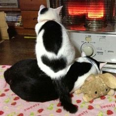 Lovely - warm kitties