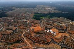 EU food imports help drive illegal deforestation