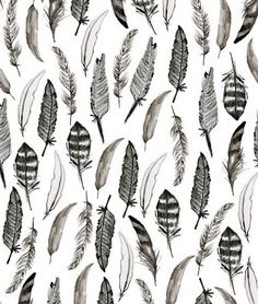 Black and white b/w feathers