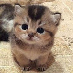Cute Kitten and like
