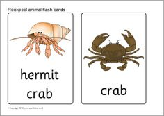 Rockpool animal flash cards (SB8110) - SparkleBox