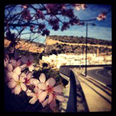 La primavera en Chulilla quiere y no puede16 de febrero 2014